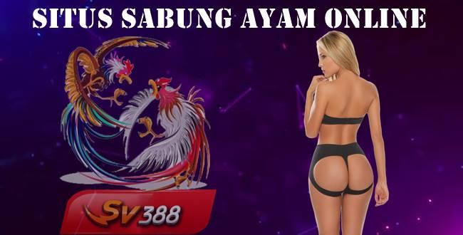 Situs Sabung Ayam Online Bisa Membuat Anda Sukses